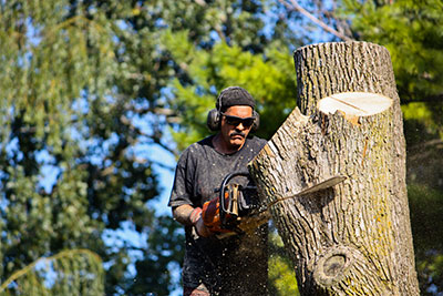 boerne tree service pros tree removal